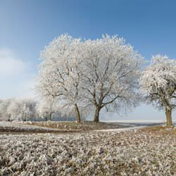 Frost covering trees and a grassy field in Franklin